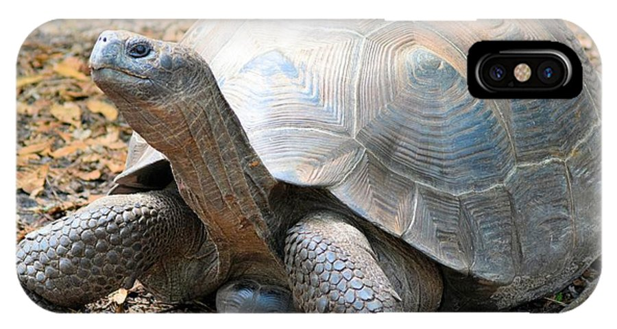 Galapagos Tortoise IPhone X Case featuring the photograph Galapagos Tortoise 2 by Sheri McLeroy