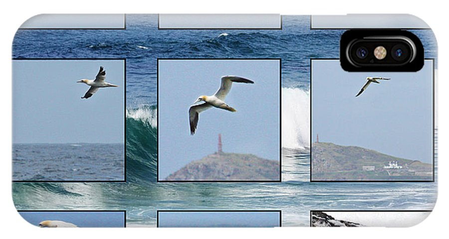 Gannet IPhone X Case featuring the photograph Gannets Galore by Terri Waters