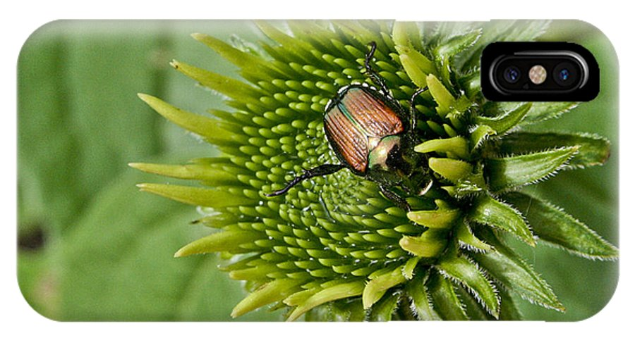 Beetle IPhone X Case featuring the photograph Garden Beetle by Justin Bopp