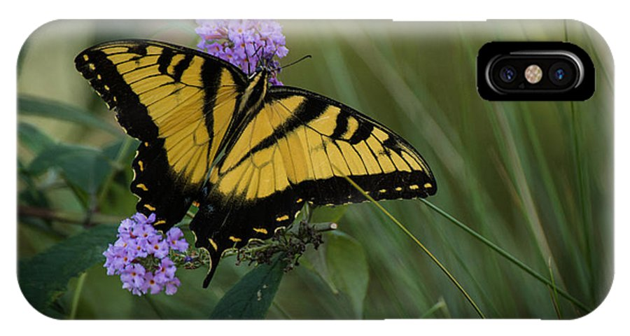 Butterflies IPhone X Case featuring the photograph Garden Delight by Julie Andel