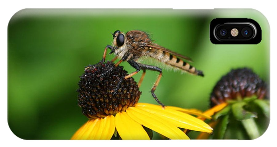 Insect IPhone X Case featuring the photograph Garden Fly by Marty Fancy