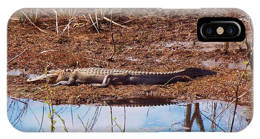 Marsh IPhone X Case featuring the photograph Gator Day by Archer