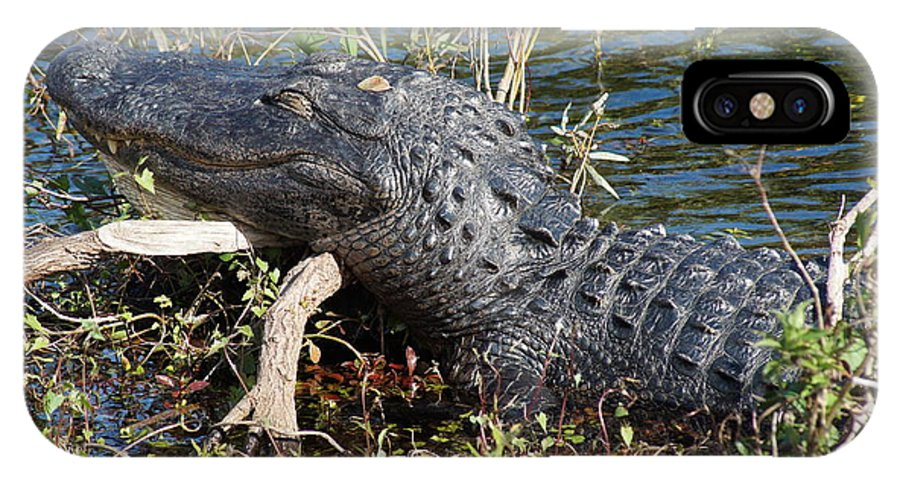 Alligator Gator Everglades National Park Florida IPhone X Case featuring the photograph Gator On A Stick by John Wall