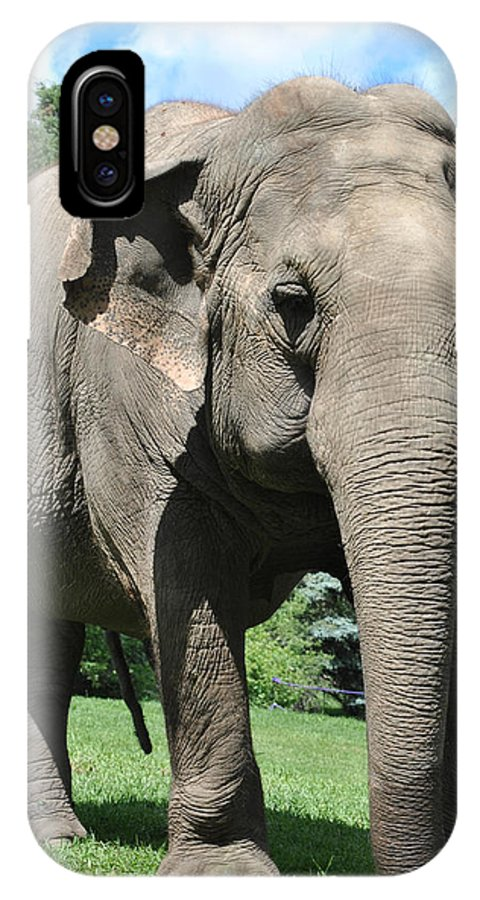 IPhone X Case featuring the photograph Gentle Giant by Jim Hogg