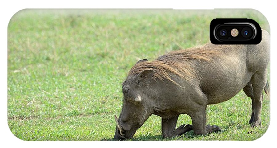 Warthog IPhone X Case featuring the photograph Genuflect by Ian Ashbaugh
