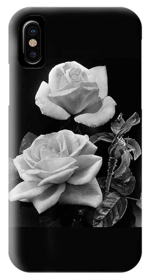 Flowers IPhone X Case featuring the photograph 'george Arends' Roses by J. Horace McFarland