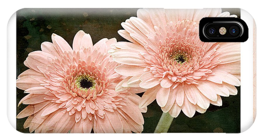 Gerber IPhone X Case featuring the photograph Gerber Daisy Love 5 by Andee Design