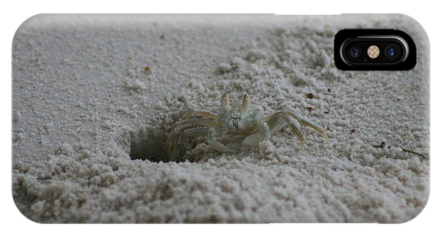 Crab IPhone X Case featuring the photograph Ghost Crab by Debbie Cundy