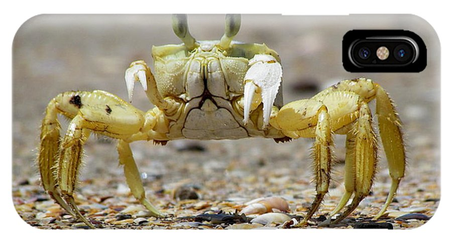 Crab IPhone X Case featuring the photograph Ghost Crab by Nigel Lallsingh