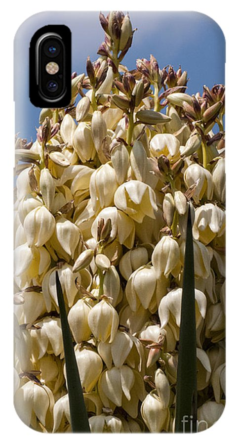 James River Road Mason Texas Yucca Bloom Leaf Leaves Plant Plants Yuccas Blooms Wildflowers Wildflower Flower Flowers Spring IPhone X Case featuring the photograph Giant Bloom by Bob Phillips