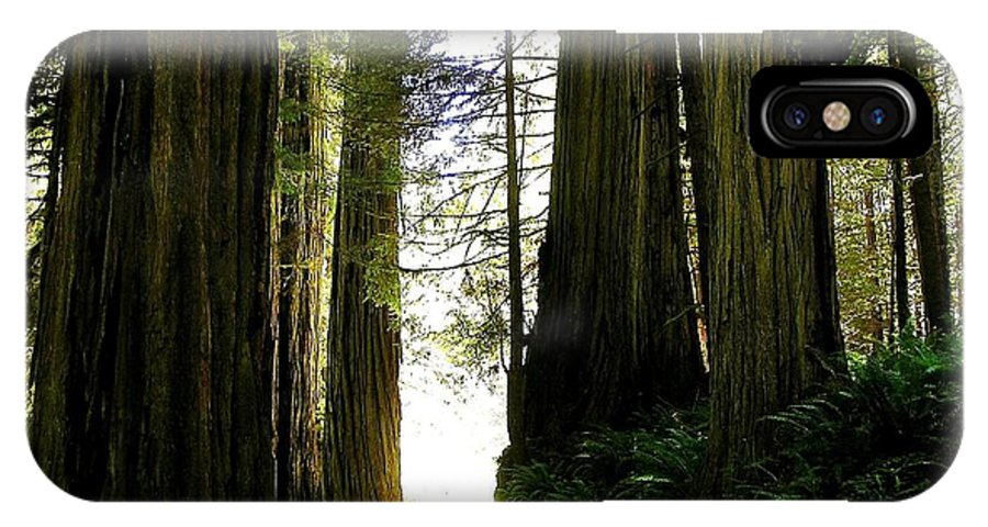 Jedidiah State Park IPhone X Case featuring the photograph Giant Redwoods by Barbara Stellwagen