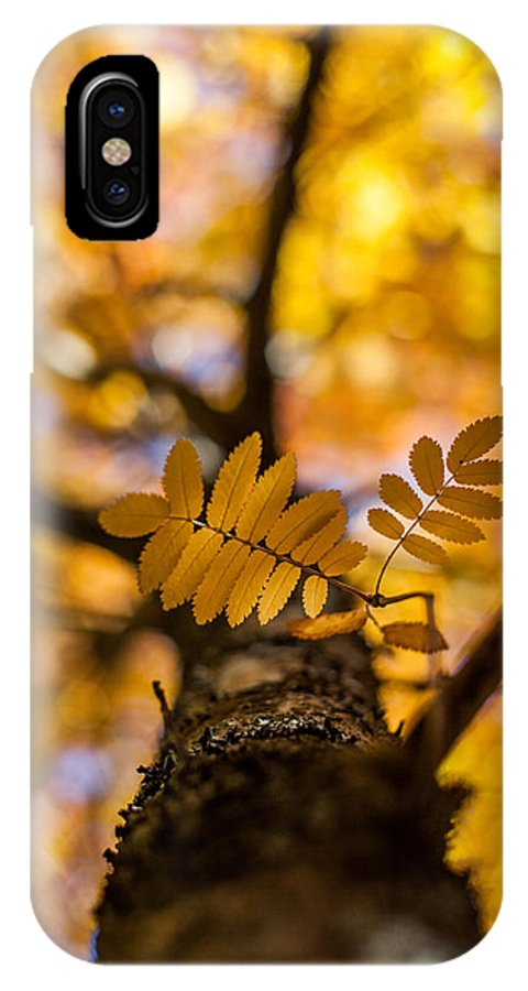 Autumn IPhone X Case featuring the photograph Gilded by Aaron Aldrich