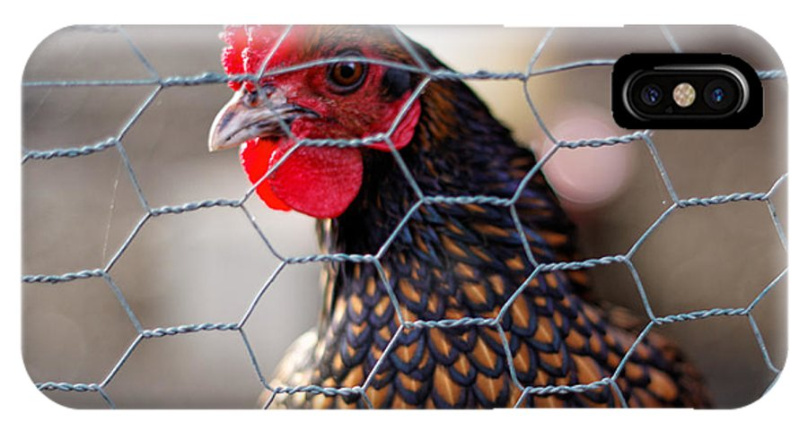 Chicken IPhone X Case featuring the photograph Ginger by Scott Hill
