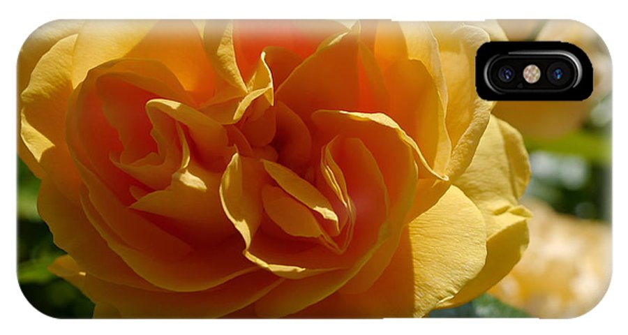 Rose IPhone X Case featuring the photograph Ginny's Rose In The Sun by Christiane Schulze Art And Photography