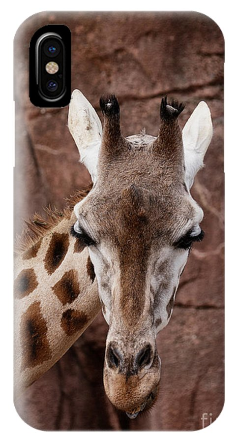 Giraffe Head IPhone X Case featuring the photograph Giraffe Head by Brothers Beerens
