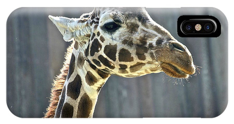 Animals IPhone X Case featuring the photograph Giraffe by SC Heffner