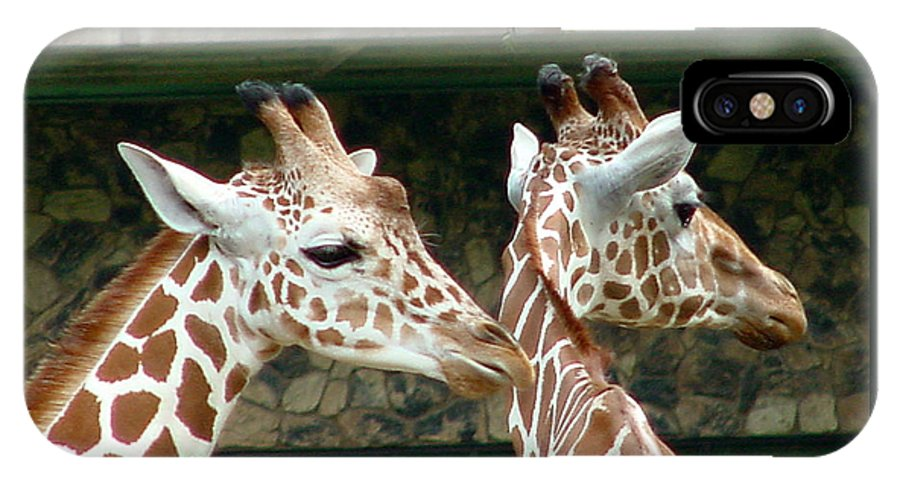 Giraffe IPhone X Case featuring the photograph Giraffes-09023 by Gary Gingrich Galleries
