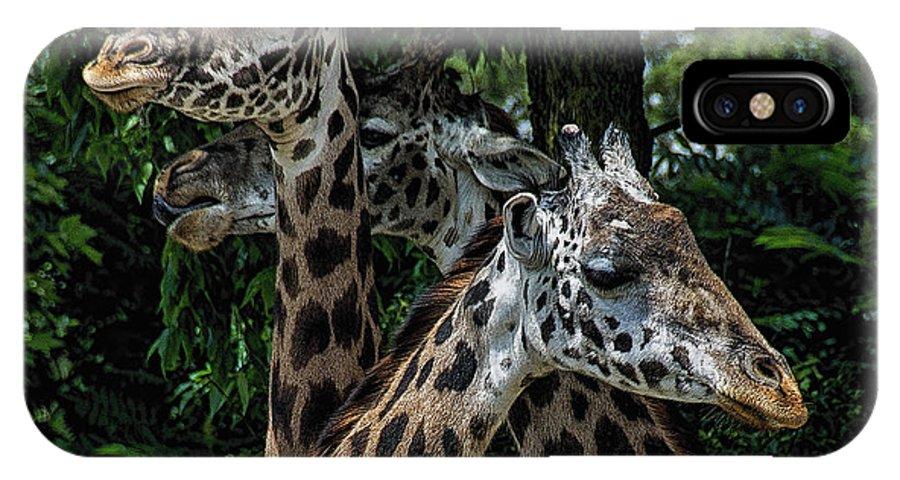 Giraffs IPhone X Case featuring the photograph Giraffs by Eugene Carpenter