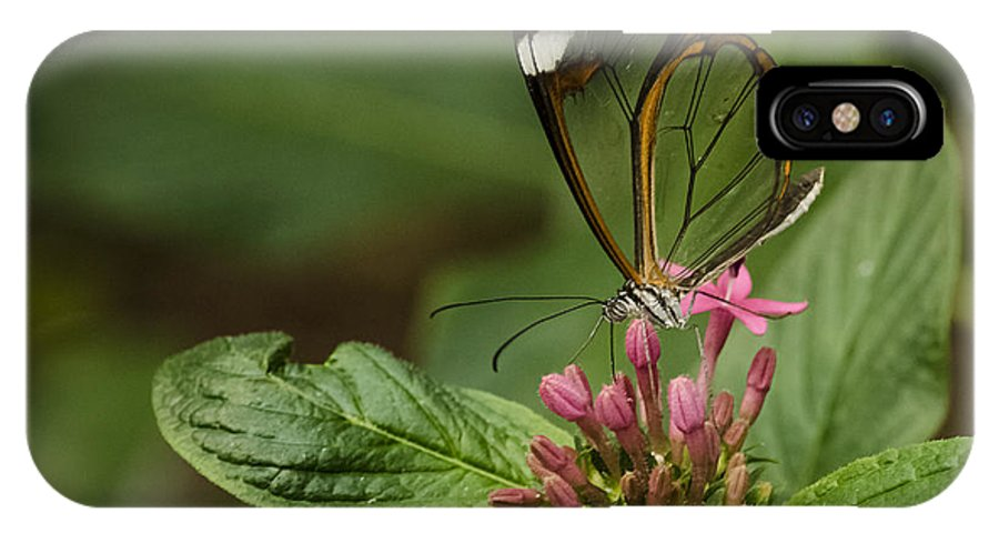 Glasswing IPhone X Case featuring the photograph Glasswing by Gabrielle Libby