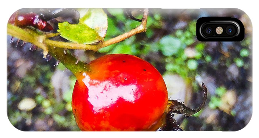 Rose Hip IPhone X Case featuring the photograph Glistening Wet Rose Hip by Roxy Hurtubise