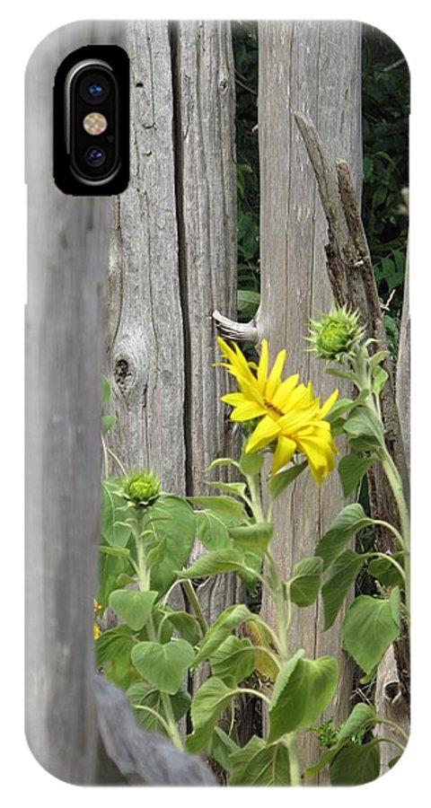 Sunflower IPhone X Case featuring the photograph Gloria's Favorite by Barbara McDevitt