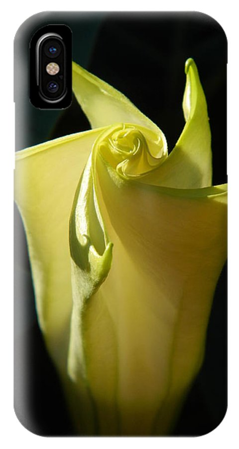Angel's Trumpet IPhone X Case featuring the photograph Glorious Angel by Terri Waselchuk