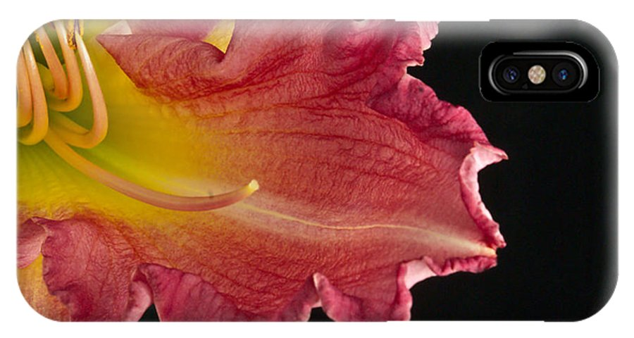 Glorious IPhone X Case featuring the photograph Glorious Lily by Douglas Barnett