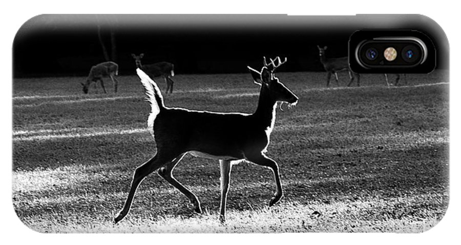 Deer IPhone X Case featuring the photograph Glowing Buck by Lorna R Mills DBA Lorna Rogers Photography
