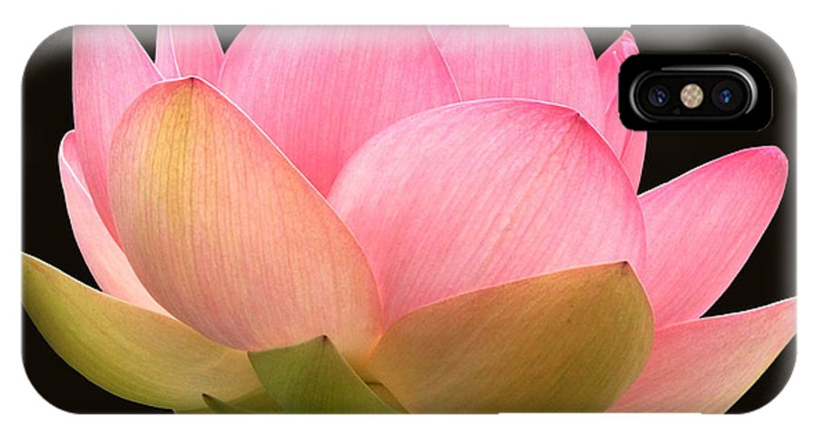 Glowing Pink Lotus Flower IPhone X Case featuring the photograph Glowing Lotus Square Frame by Byron Varvarigos