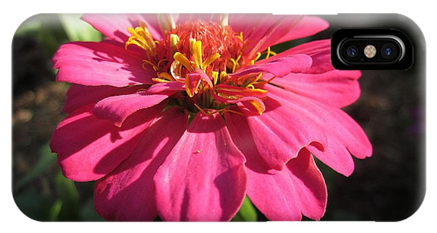 IPhone X Case featuring the photograph Glowing Zinnia by MTBobbins Photography