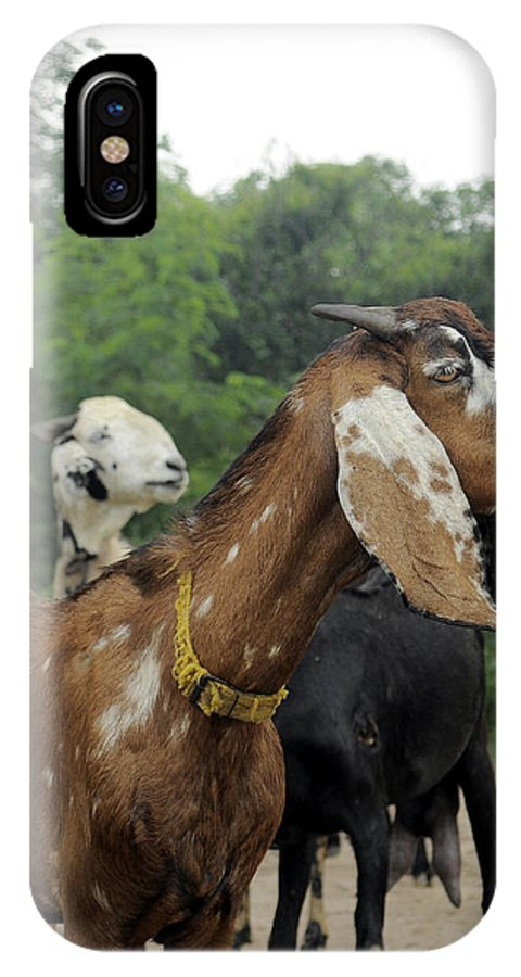 Goat IPhone X Case featuring the photograph Goat Life by Bliss Of Art