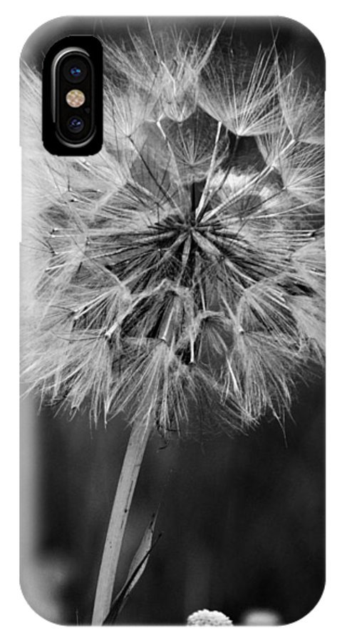 Goats Beard IPhone X Case featuring the photograph Goats Beard Seed Head - Bw by David T Wilkinson