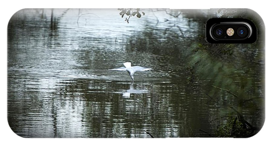 Birds IPhone X Case featuring the photograph Going In by Moments In Time Photographics