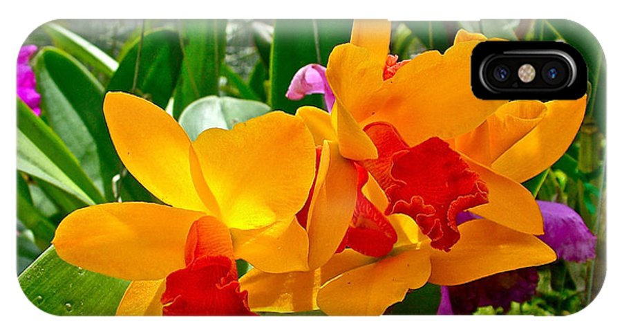 Gold And Red Orchids At Maerim Orchid Farm In Chiang Mai IPhone X Case featuring the photograph Gold And Red Orchids At Maerim Orchid Farm In Chiang Mai-thailan by Ruth Hager
