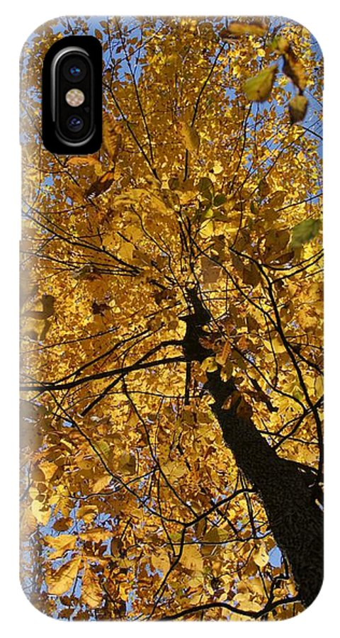 Fall IPhone X Case featuring the photograph Gold by Doug Hubbard