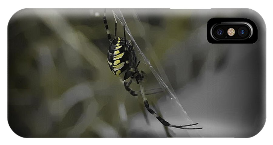 Spider IPhone X Case featuring the photograph Gold Orb Weaver by Cathy Lindsey
