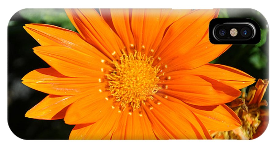Flower IPhone X Case featuring the photograph Gold Ring by Susan Herber