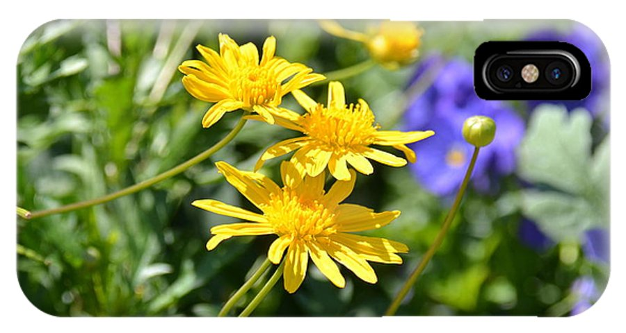 Aster IPhone X Case featuring the photograph Golden Aster by Carol Bradley