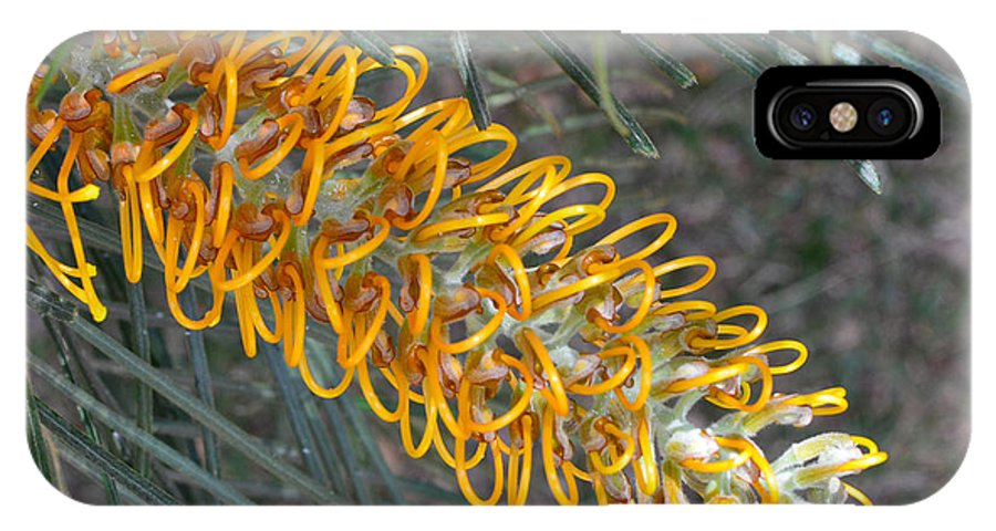 Australia IPhone X / XS Case featuring the photograph Golden Bottle Brush 3 by Lyle Barker