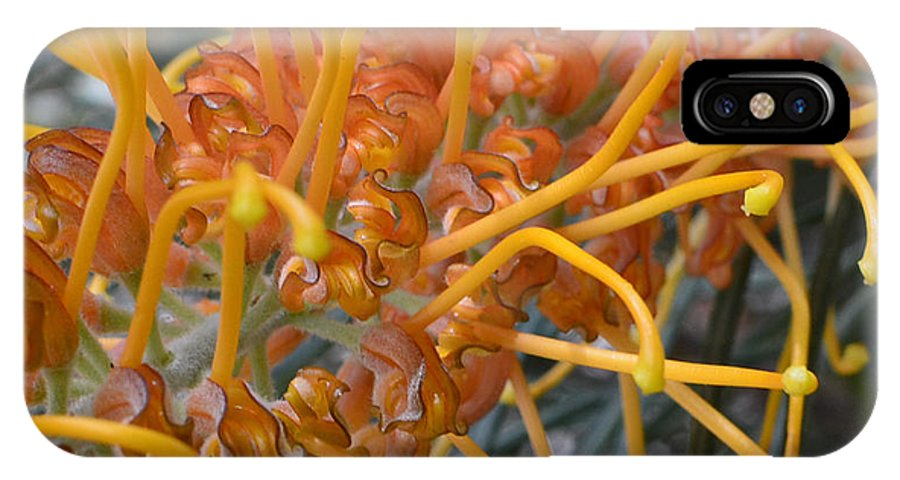 Macro IPhone X / XS Case featuring the photograph Golden Bottlebrush by Lyle Barker