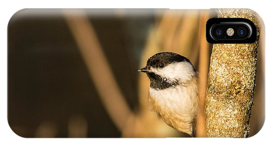 IPhone X Case featuring the photograph Golden Chickadee by Cheryl Baxter