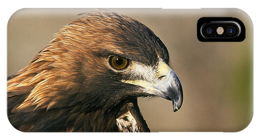 Eagle IPhone X Case featuring the photograph Golden Eagle by Buddy Mays