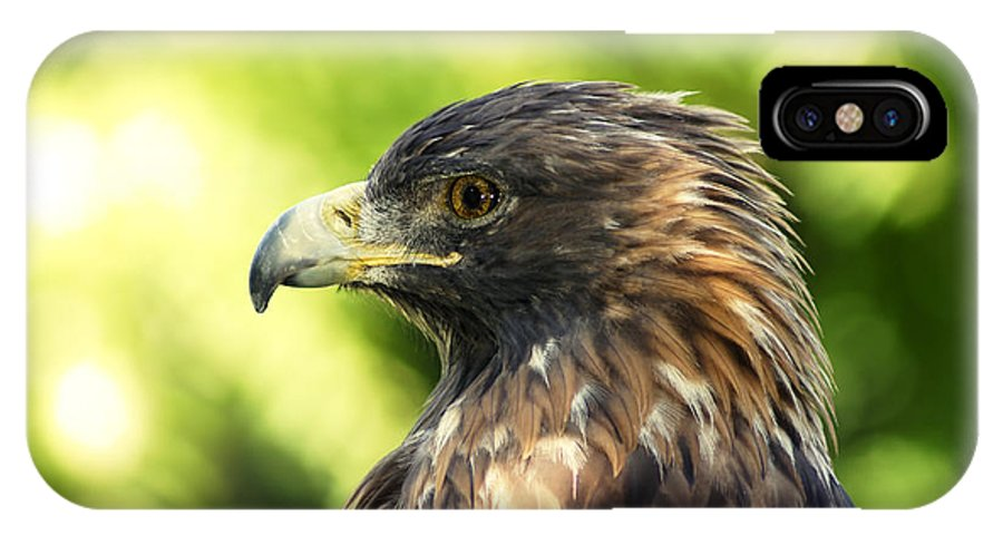 Eagle IPhone X Case featuring the photograph Golden Eagle Portrait by Sylvie Bouchard