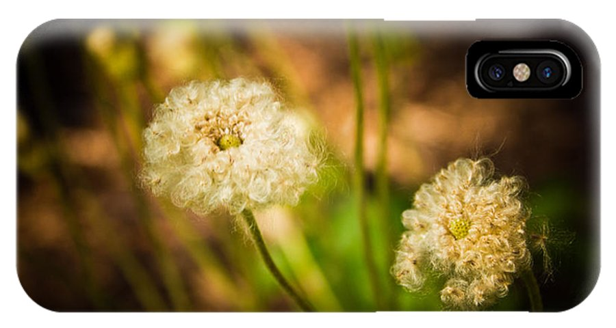 Flower Photo IPhone X Case featuring the photograph Golden Hour by Sara Frank