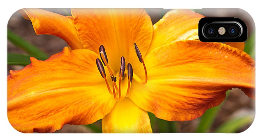 Golden IPhone X Case featuring the photograph Golden Lilly 2 by Douglas Barnett