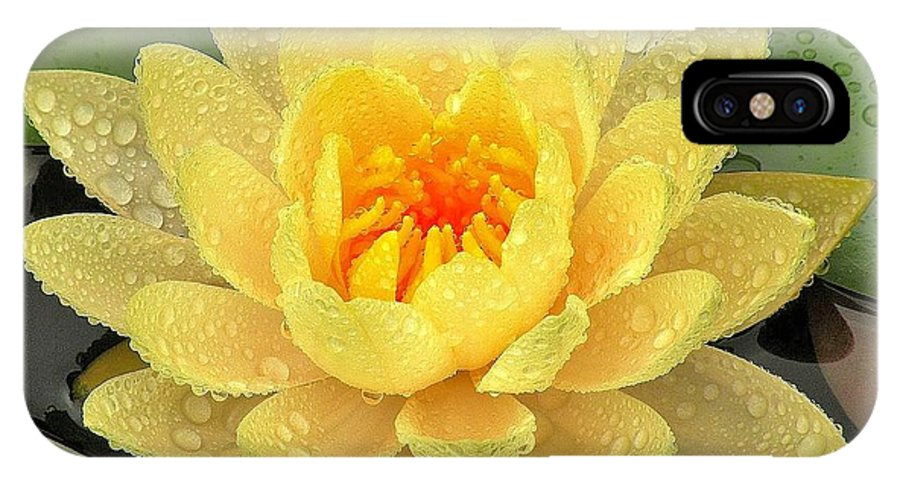 Lily IPhone X Case featuring the photograph Golden Lily by Kim Bemis