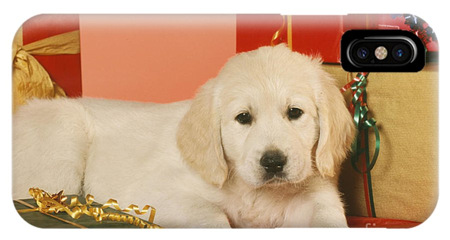 Golden Retriever IPhone X / XS Case featuring the photograph Golden Retriever Amongst Presents by Johan De Meester