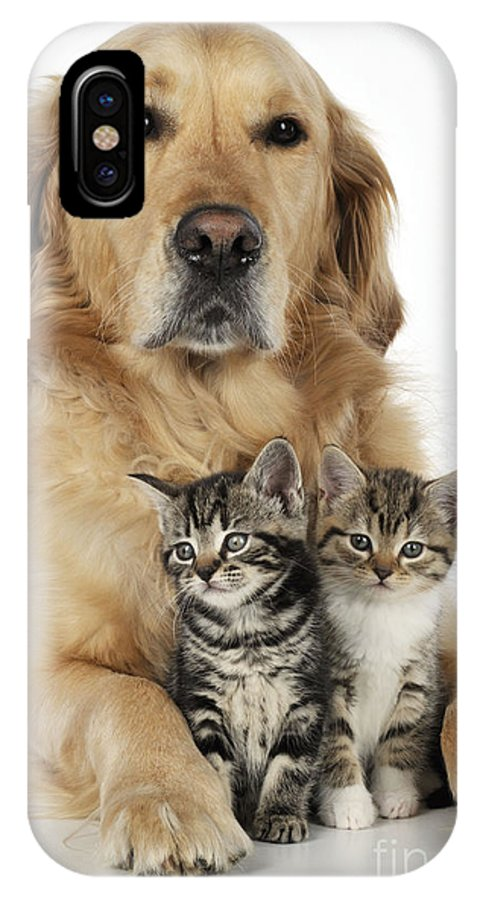 Cat IPhone X / XS Case featuring the photograph Golden Retriever And Kittens by John Daniels