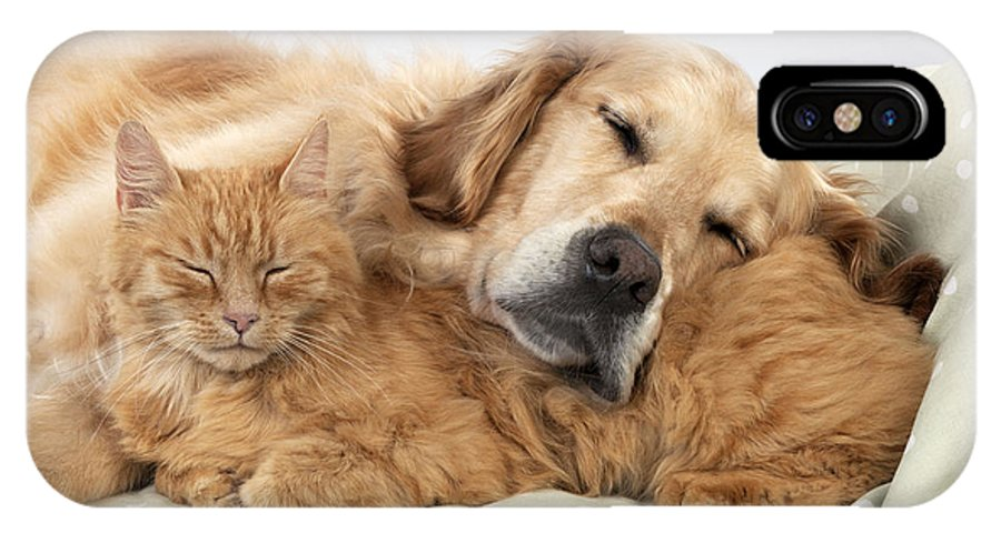 Cat IPhone X / XS Case featuring the photograph Golden Retriever And Orange Cat by John Daniels