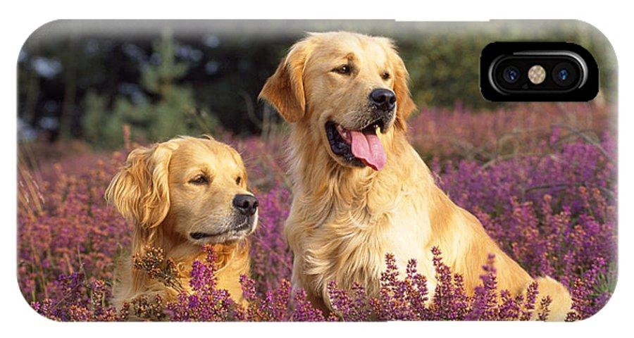 Golden Retriever IPhone X / XS Case featuring the photograph Golden Retriever Dogs In Heather by John Daniels